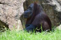 ジプシーさん、ありがとうございました - 今日ものんびり動物園