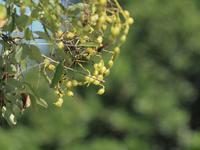 『薬樹園のいろいろな実達・・・・・』 - 自然風の自然風だより
