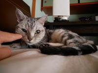 感情を味わいつくしなさい - ご機嫌元氣 猫の森公式ブログ