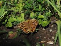 唐沢山で観察した昆虫です - コーヒー党の野鳥と自然 パート2
