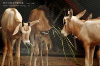 私立聖・姫セン保育園ひづめ組2 - 朝から晩まで動物園。(サファリもね)