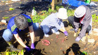 芋掘りとハイキング10月2日(月) - しんちゃんの七輪陶芸、12年の日常