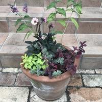 寄せ植え - sakurairo