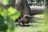 珍しい動きに出会えました - 動物園に嵌り中
