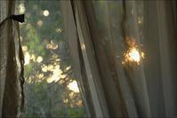 木々の間にかいま見られた赤い夕陽に手をあわせて - 生きる歓び Plaisir de Vivre。人生はつらし、されど愉しく美しく