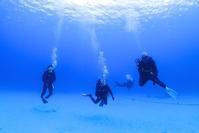 イルカとカメスイム!奄美大島ダイビング - 奄美大島 ダイビングライフ    ☆アクアダイブコホロ☆