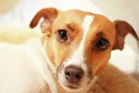 愛しい愛犬達 - 大分の田舎暮らしとハードボイルド・ワンダーランド