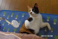 キラキラ瞳のアイちゃんと遊ぶ - 猫と自然と散歩の日々