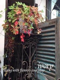 『〜IVORY 花教室 10 October 開催です〜♬』 -  Flower and cafe 花空間 ivory (アイボリー)