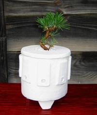 水耕盆栽鉢(その2) - North Lake Plants