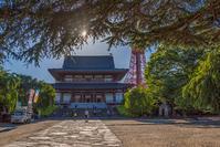 記憶の残像 2017年花の東京 -46東京都港区増上寺 - ある日ある時 拡大版