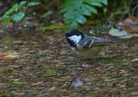 水場にて - 今日も鳥撮り