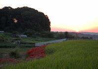 大阪 太子町 推古天皇陵 夕日 - 魅せられて大和路