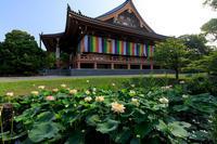 夏の花々・智積院 - 花景色-K.W.C. PhotoBlog