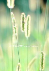 秋の陽射し - 花々の記憶