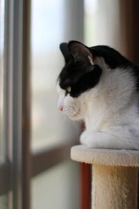創業感謝祭・第四弾!ナツ - Black Cat Moan