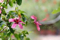 まゝに/10月の散策/浜名湖ガーデンパーク2 - Maruの/ まゝに