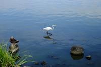 午後の岸辺 - MAKO'S PHOTO
