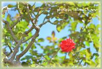 富樫のバラ園へドライブ - ひとみの興味津々でございます!日々のブログ