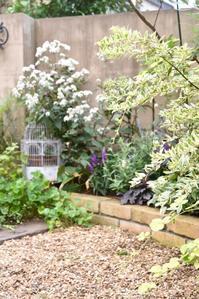 今日の裏庭から - 小さな庭 2