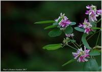季節の花萩 - 野鳥の素顔 <野鳥と日々の出来事>