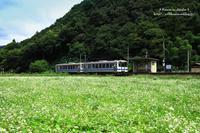 三江線と蕎麦畑 Ⅱ - *花音の調べ*