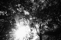 振り向けは夕照に秋が来ている。 - Yoshi-A の写真の楽しみ