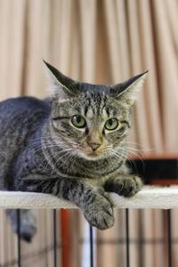 創業感謝祭・第五弾!小梅 - Black Cat Moan