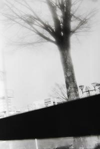 ローライ35TEで撮影③ Rollei RPX400 増感800×FUJI SPD 原液現像 - モノクロフィルム 現像とプリント 実例集