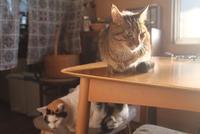 最近の猫の居場所 - きつねこぱん