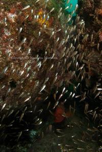 ひとつの世界 - Diving Life ~Aita pe'a pe'a~