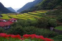山鹿市の番所の棚田と彼岸花 - スクール809 熊本県荒尾市の個別指導の学習塾です