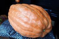 ジャンボかぼちゃの重さ当てクイズ! - 手柄山温室植物園ブログ 『山の上から花だより』