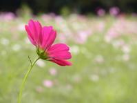 今日の体調5 -  ひと・環境計画のエコ姫ブログ