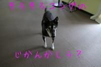 コング部屋 - HAMAsumi-Life