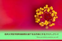 信州大学医学部附属病院の廊下をお花畑にするプロジェクトⅤ - ai...ting wo shuo