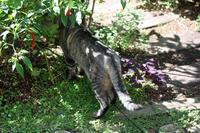爪きり - 小さな森のキキとサラ
