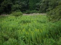 今年もやります!草刈大作戦~2017~ - 千葉県いすみ環境と文化のさとセンター