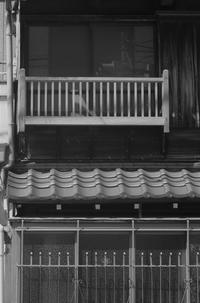 武蔵野紀行40 - はーとらんど写真感