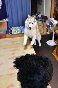 ファイト いっぱーつ!! (^o^) - 犬連れへんろ*二人と一匹のはなし*