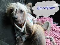 ドキドキしながら過ごした。。。結果 - 毎日笑顔♪ 裸犬☆温・真珠・絆愛Ⅱ
