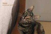 猫を撮る19 - 写楽彩