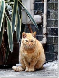 【は】配管とネコ:はいかんとねこ - ネコニ☆マタタビ