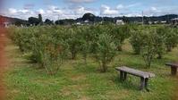 人生の楽園散歩 鹿沼市へ - Rose&Farm