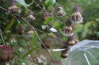 寒露(10/8~10/22)のころ、宮迫で咲く花 - 宮迫の! ようこそヤマボウシの森へ