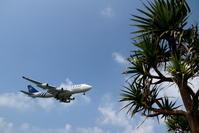 アダンとB747-400 - 南の島の飛行機日記