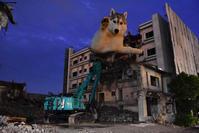 壊し屋はな、ふたたび (^_^;) - 犬連れへんろ*二人と一匹のはなし*