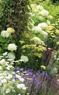 黄色は私にとっての元気色 - HOME SWEET HOME ペコリの庭 *