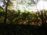 紅葉の始まり♪ - refalt blog