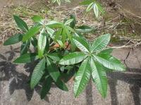 観葉植物・秋 - ミドルの日常?シニアの日々